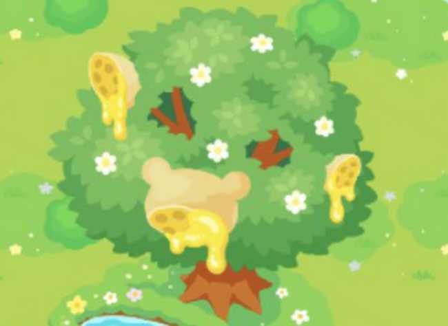 はちみつの木